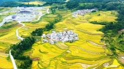 贵定:大地流金披色彩 美丽乡村入画来