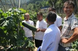 罗甸:蔬菜种植再添良种良法 传统产业迭代再焕新生