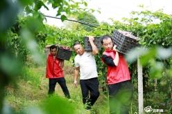 福泉陆坪:特色农业助丰收